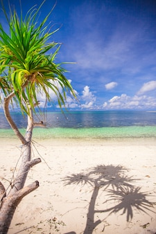 Kleine tropische kokosnusspalme in der einsamen insel