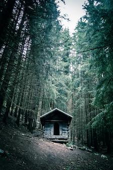 Kleine verlassene holzhütte in einem tiefen dunklen tannenwald