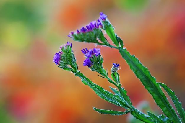 Kleine violette blüten gegen die natur