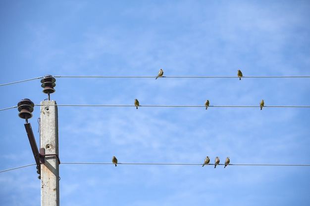 Kleine vögel sitzen auf den drähten. gegen den blauen himmel