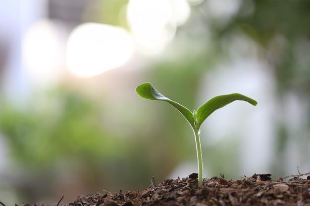 Kleine wachsende grüne pflanze mit dunkelbraunem boden