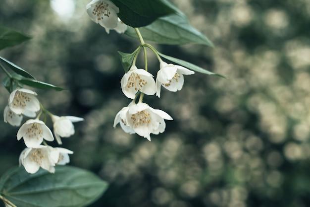 Kleine weiße blüten auf grün