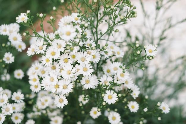 Kleine weiße grasblume im garten