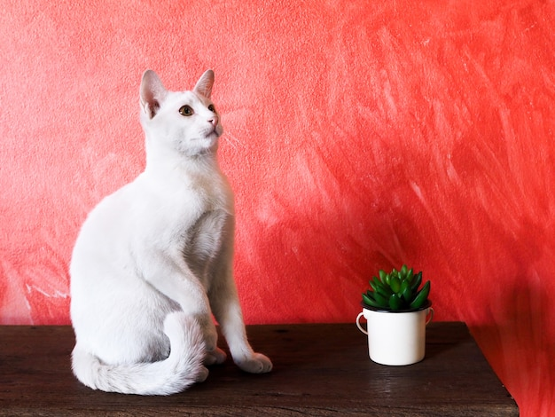 Kleine weiße thailändische katze, die auf holztisch mit dekorativem baum und roter wandoberfläche sitzt.