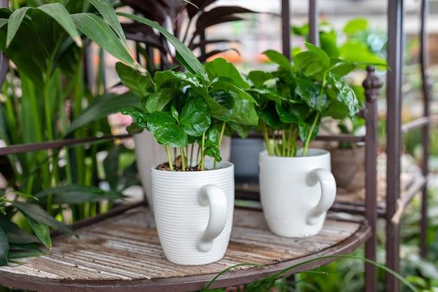 Kleine zimmerpflanze in einer kreativen teetasse