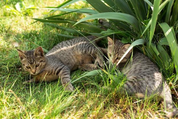 Kleine zwei kätzchen, die im gras spielen