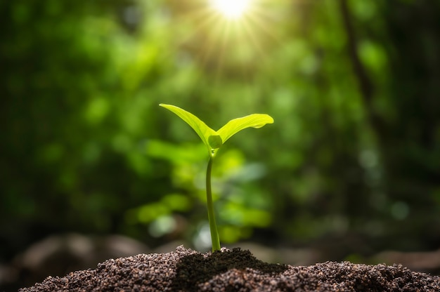 Kleiner baum, der mit sonnenaufgang wächst. konzept der grünen welt und des tages der erde