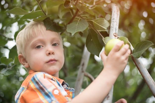 Kleiner blonder junge, der äpfel pflückt