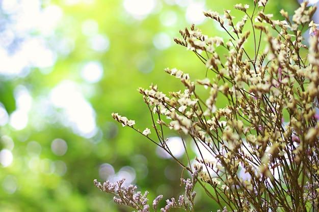 Kleiner blumenblumenstrauß mit grünem garten