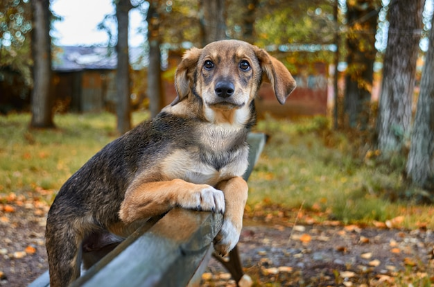 Kleiner brauner streunender hund auf der straße