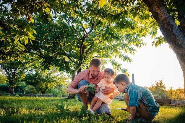 Kleiner bruder und kleine schwester pflanzen bei sonnenuntergang mit ihrem vater setzlinge in einem wunderschönen frühlingsgarten.