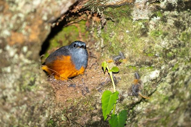 Kleiner bunter vogel auf einem baum in madagaskar