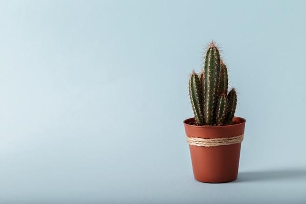 Kleiner dekorativer kaktus