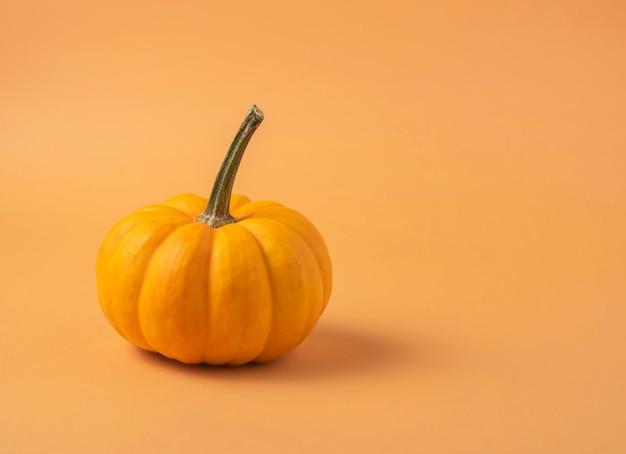Kleiner dekorativer mehrfarbiger kürbis auf einer orange.