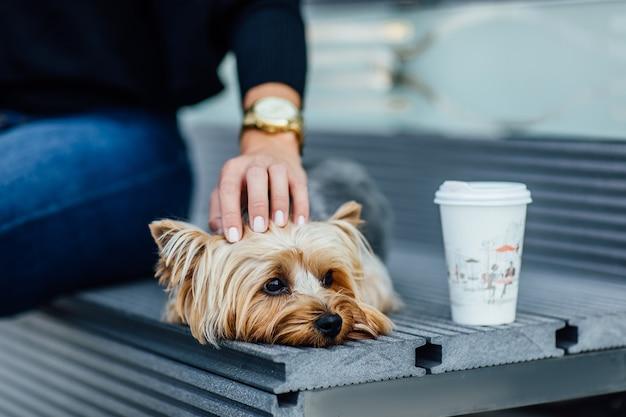 Kleiner entzückender yorkshire-terrier-hund, der vom besitzer in einer haustiertasche getragen wird, um unsere tür und drinnen zu reisen. zubehör für hundebesitzer.