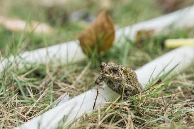 Kleiner frosch auf gummiband im park.