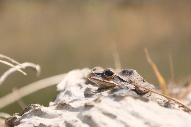 Kleiner frosch beim sonnenbaden