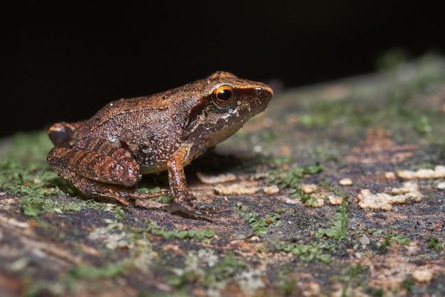 Kleiner frosch thront auf einem trockenen baum voller moos
