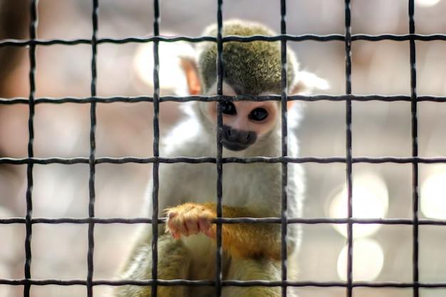 Kleiner gelber beinaffe auf baum im zoo käfig