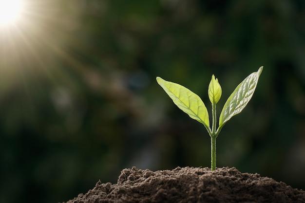 Kleiner grüner baum, der im garten mit sonnenlicht wächst. öko-konzept