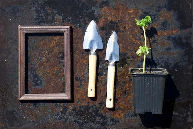 Kleiner grüner tomatensämling und eine stahlschaufel und ein holzrahmen in plastiktöpfen auf rustikaler eisenoberfläche