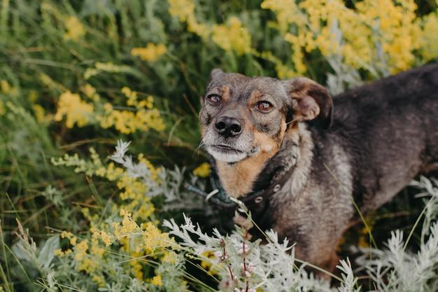 Kleiner hund auf dem geblühten gebiet. wilde blumen. schwarzer hund
