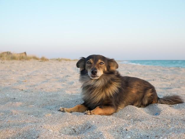 Kleiner hund, der auf den inhaber auf dem meer wartet