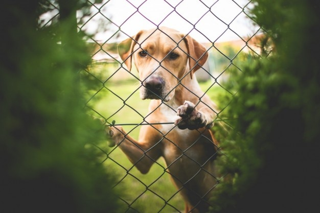 Kleiner hund hinter dem zaun