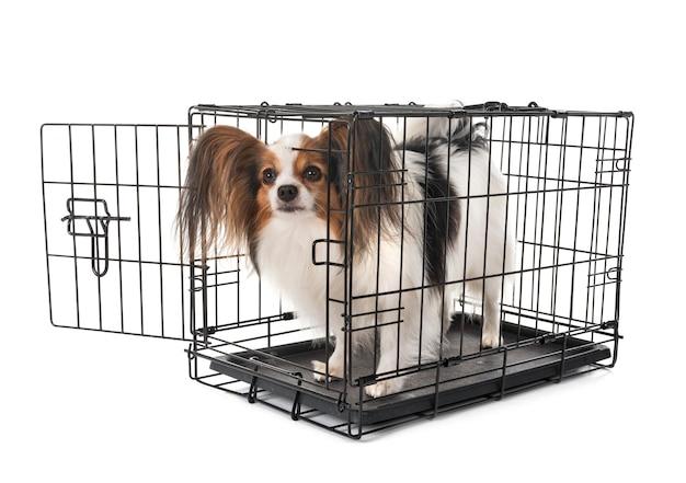 Kleiner hund im käfig