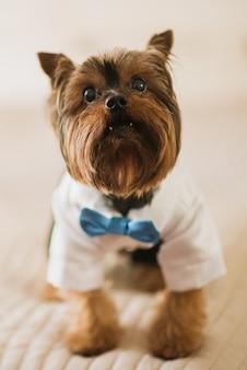 Kleiner hund in weißem rock und blauen fliege gekleidet