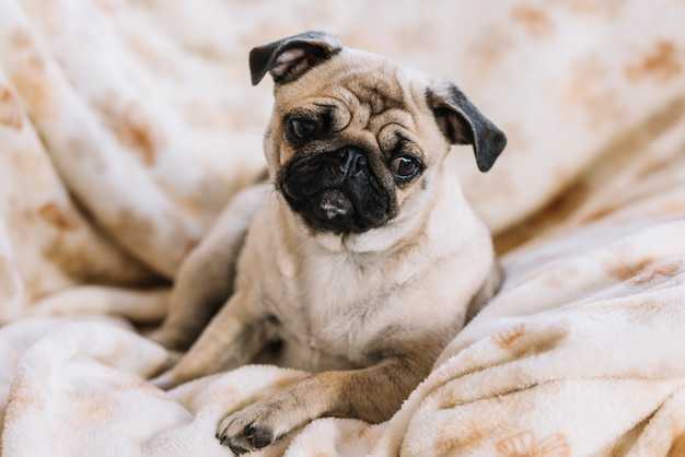 Kleiner hund liegend auf bettdecke