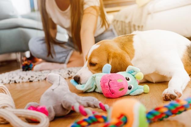 Kleiner hund zu hause im wohnzimmer, der mit seinen spielsachen spielt. junge frau spielt mit einem hund.