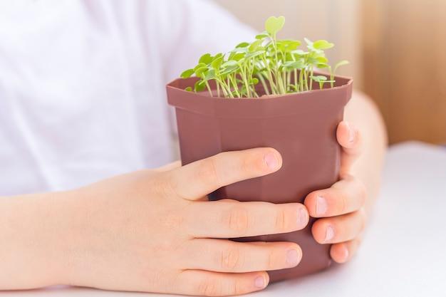 Kleiner junge, der den topf mit der jungen pflanze hält. für die natur sorgen. konzept des tages der erde und des weltumwelttags.