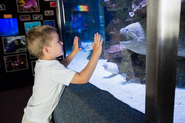 Kleiner junge, der fischbecken betrachtet