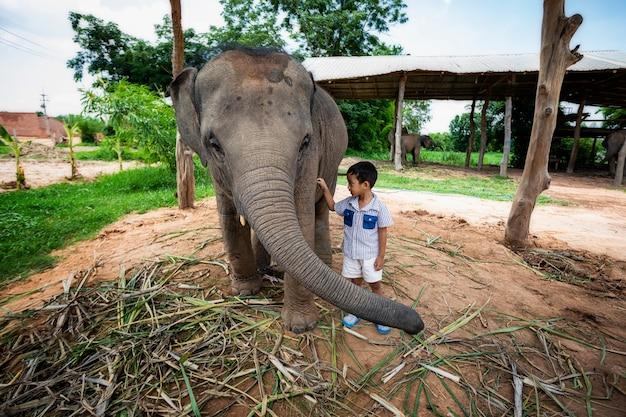 Kleiner junge, der mit dem elefantenbaby spielt, zeigt die liebe, die verbindung zwischen menschen und elefanten.