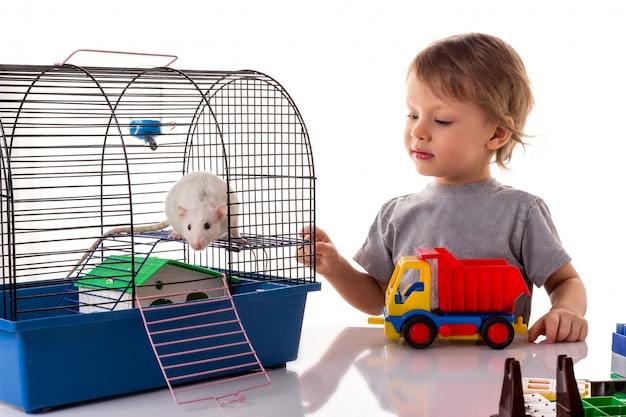 Kleiner junge, der mit einem weißen rattenhaustier spielt
