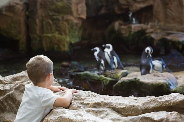 Kleiner junge, der pinguine betrachtet