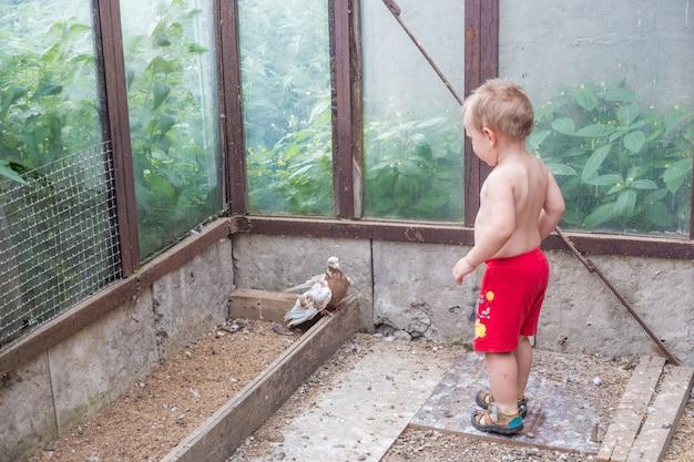 Kleiner junge, der taube jagt, glückliches kind.