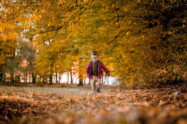 Kleiner junge geht in der natur im herbst, ein vorschulkind im herbstpark in gelben blättern.