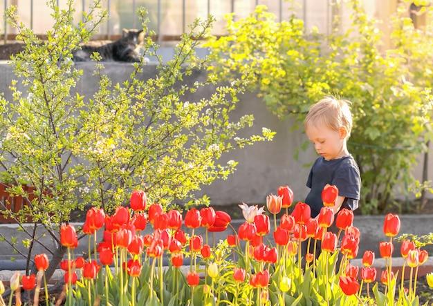 Kleiner junge im schönen garten unter roten tulpenblumen.