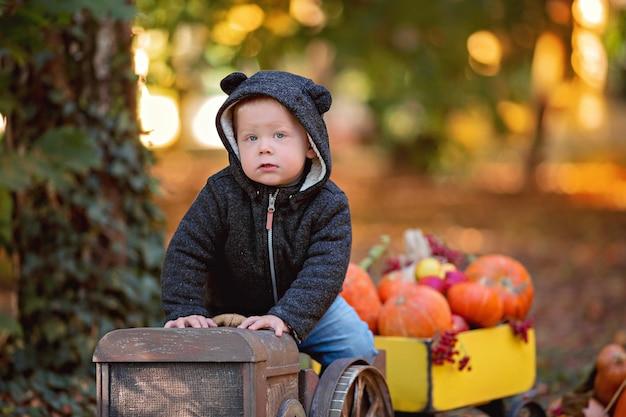 Kleiner junge in einem traktor mit einem karren mit einer herbsternte kürbisse, viburnum, eberesche, äpfel