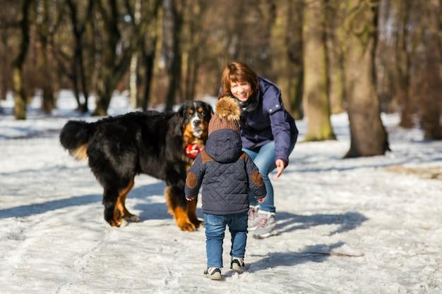 Kleiner junge kommt zu einer frau, die mit dem berner sennenhund spielt