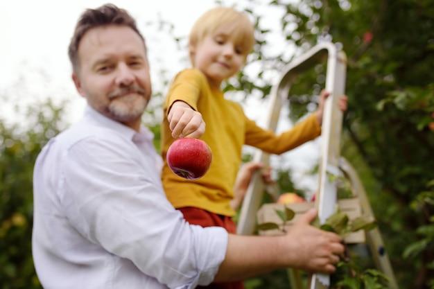 Kleiner junge mit seinem vater, der äpfel im obstgarten pflückt. konzentrieren sie sich auf großen roten apfel in der hand des kindes.