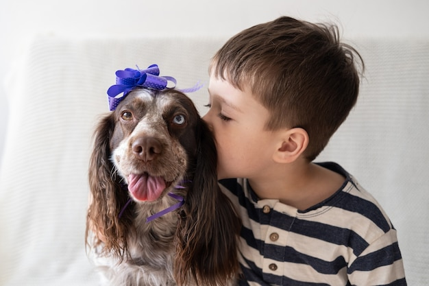 Kleiner junge umarmen russische spanielschokolade merle verschiedene farben augen lustiger hund, der bandbogen auf kopf trägt. geschenk. urlaub. alles gute zum geburtstag. weihnachten.