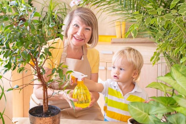 Kleiner junge und ihre großmutter kümmern sich zu hause um pflanzen, drinnen.