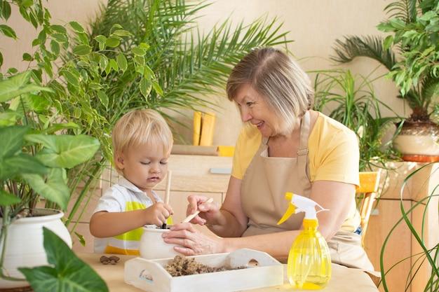 Kleiner junge und seine großmutter kümmern sich zu hause um pflanzen, drinnen. pflege von zimmerpflanzen zu hause.