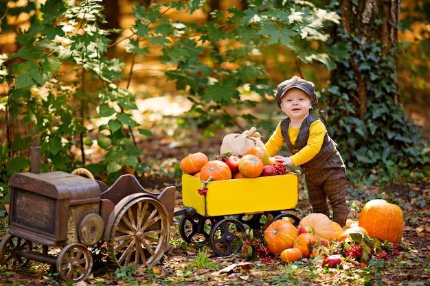 Kleiner junge und traktor mit kürbissen, viburnum, eberesche, äpfeln
