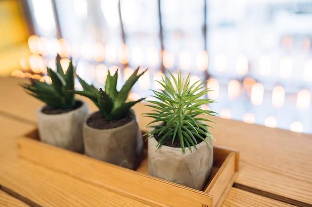 Kleiner kaktus und aloe in kleinen töpfen