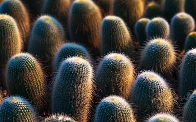 Kleiner kaktusmuster-beschaffenheitshintergrund