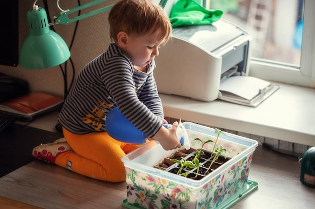 Kleiner kaukasischer junge 2 jahre alt, der sämlinge von einer sprühflasche wässert, während er auf einem tisch sitzt und sämlinge für das pflanzen in einem gewächshaus vorbereitet